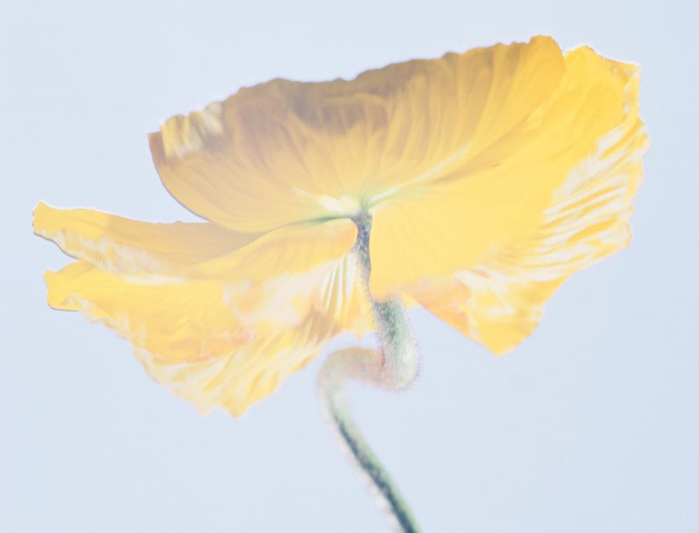 Screen Shot 2015-04-03 at 3.59.07 PM.png