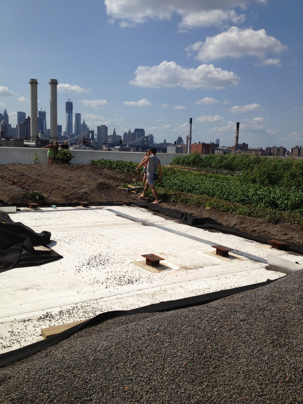 The beginning stages of the Brooklyn Navy Yard Roof Farm by EKLA, PLLC