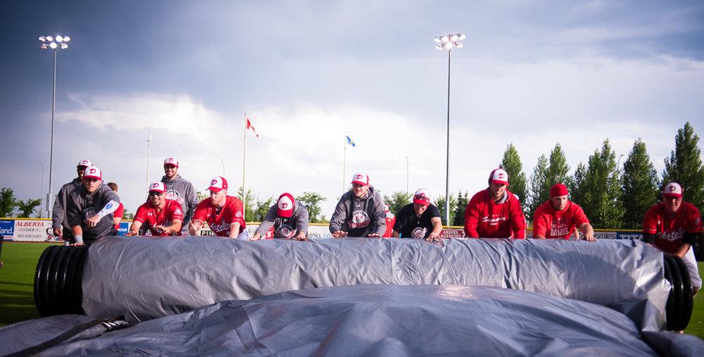 Okotoks Dawgs players help roll the tarp off the field on Tuesday. Photo Credit: Angela Burger