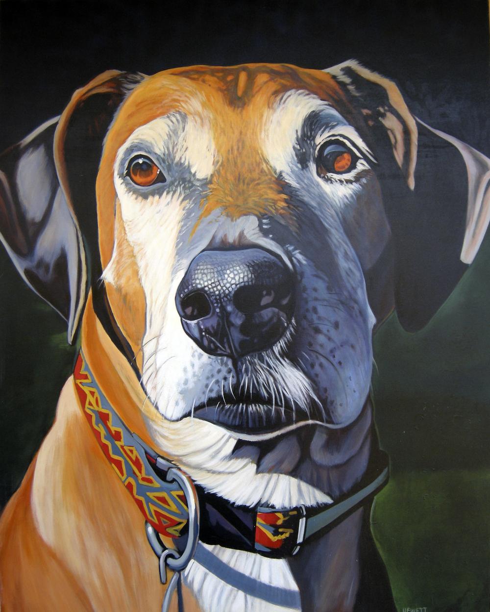 Jasper, Our Ridgeback