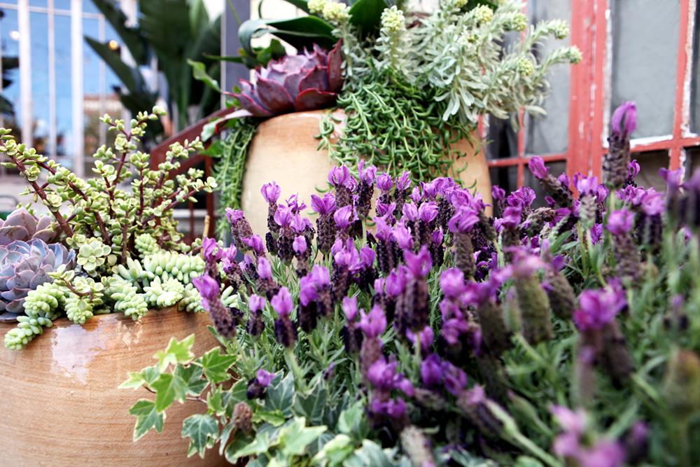 container_gardening1.jpg