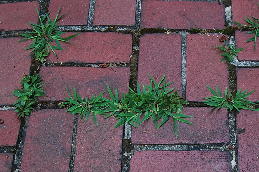 Photo of street flowers growing amongst the bricks