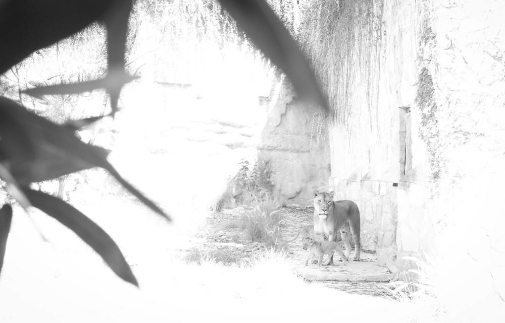 SA Zoo (5 of 9).jpg