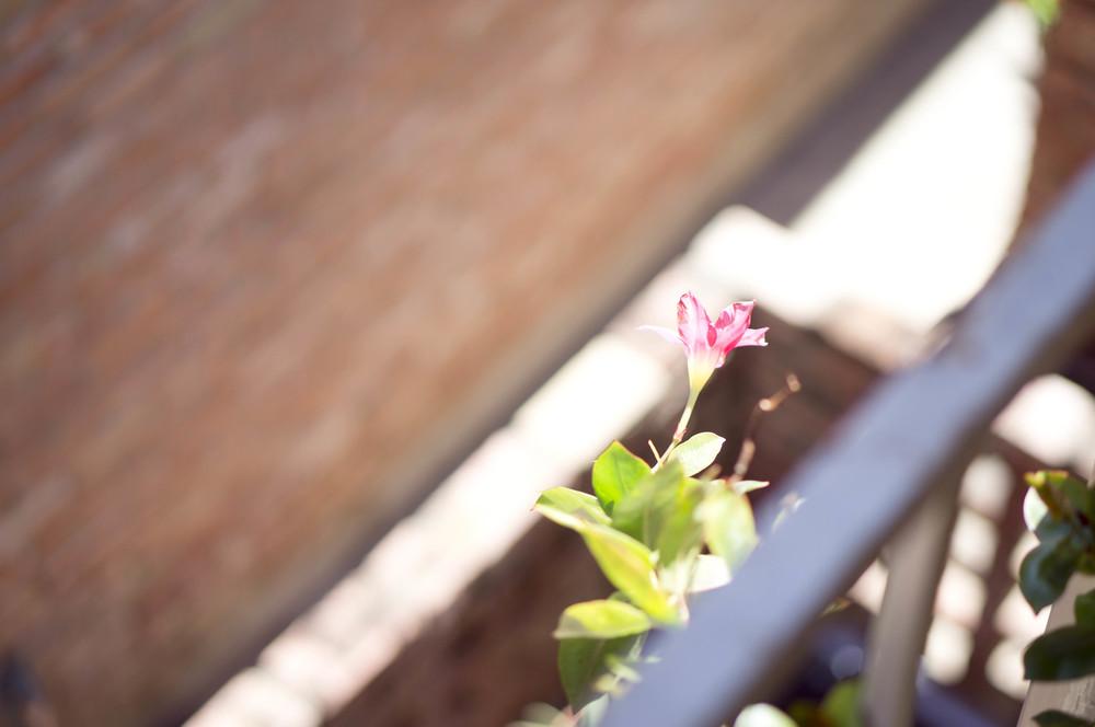 Gardening (3 of 4).jpg