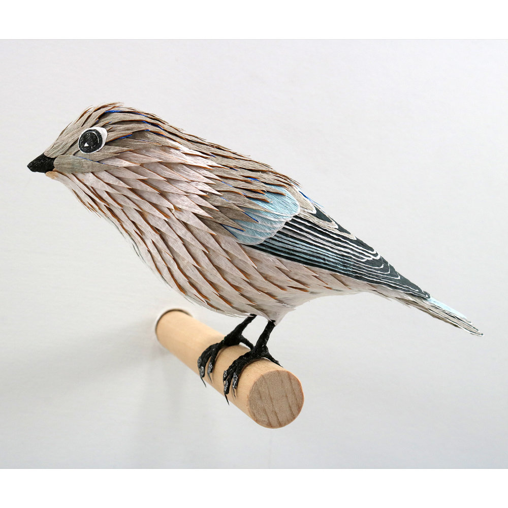 BluebirdFemaleWeb.jpg