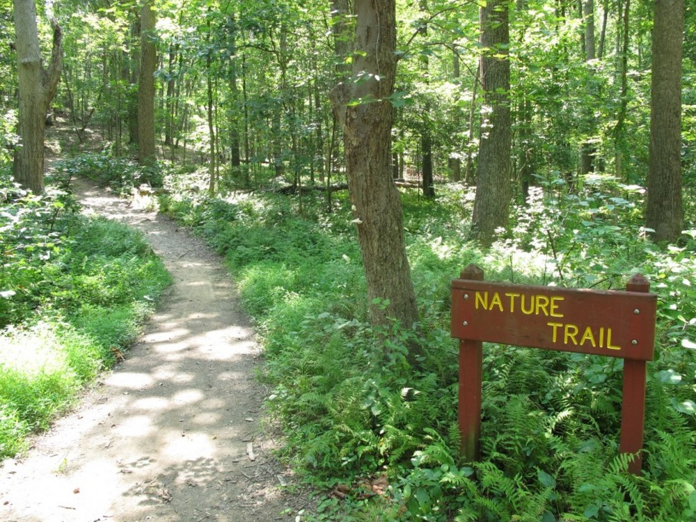 Can Spending Time In Nature Improve >> Research Info Nature Rx