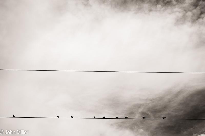 Nueve Pájaros