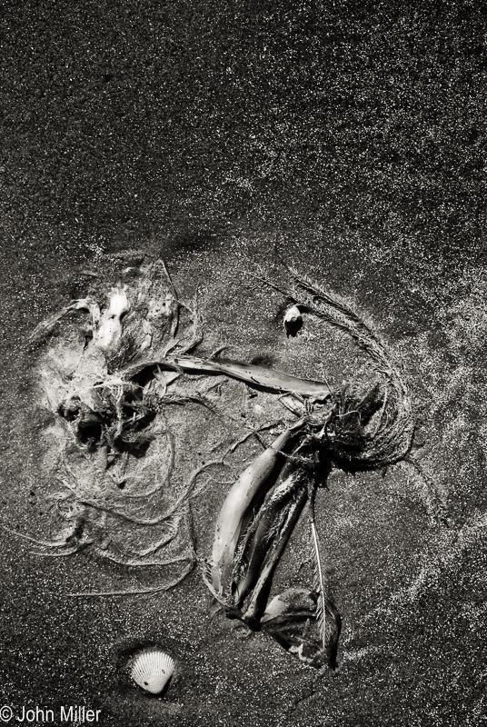 Beach Things 2 - JohnMillerPhotography
