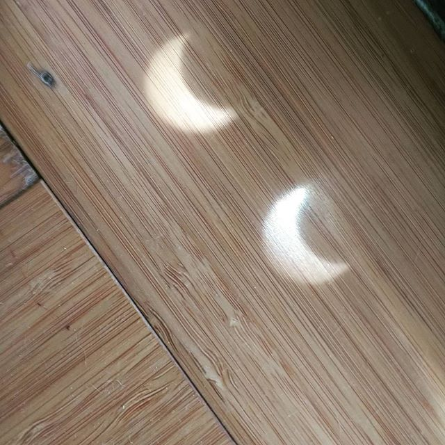 Found these moving across my living room. #eclipse2017 #wedontneednostinkinglasses