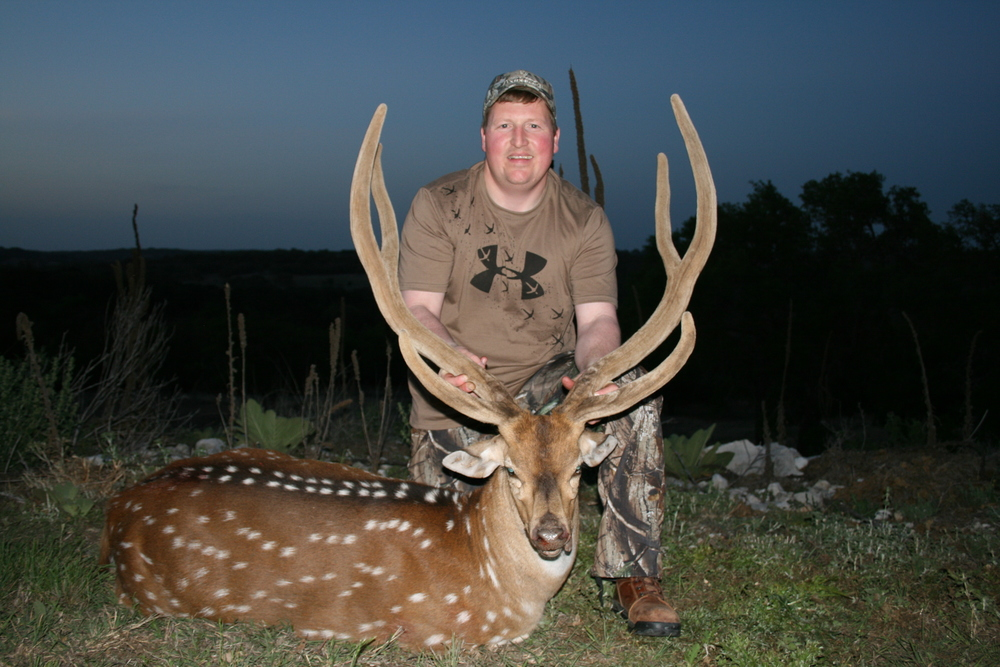Trophy Axis Buck, Gold Medal,  TGR