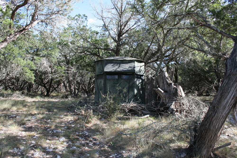 Whitetail, Exotic Deer Hunting Blind