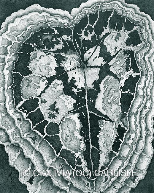 Cyclamen Cyclamen Persicum Green CARLISLE.jpg