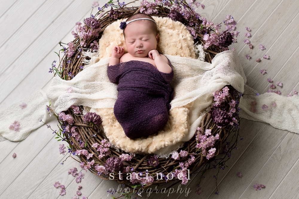 Charlotte NC newborn baby girl photographed by Staci Noel photography with purple wrap in nest with purple flowers