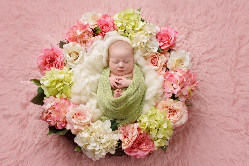 Charlotte NC newborn