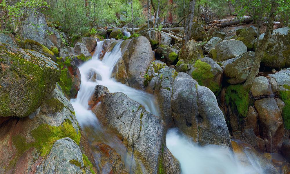 Peace in the Woods of Yosemite.jpg