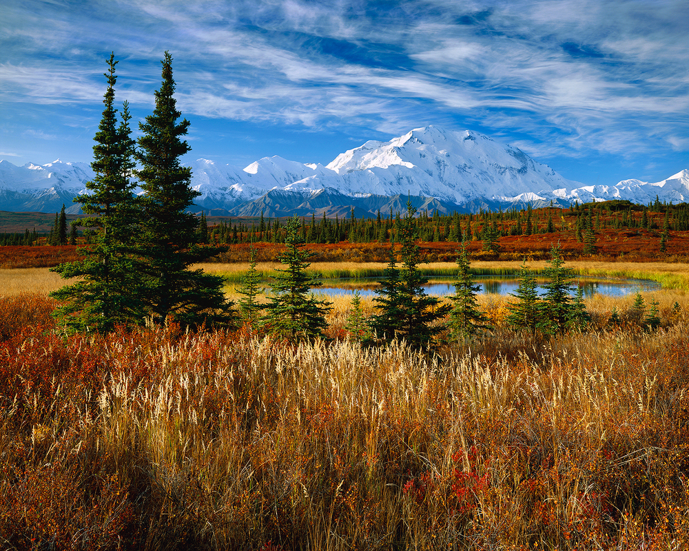 Denali Morning.jpg