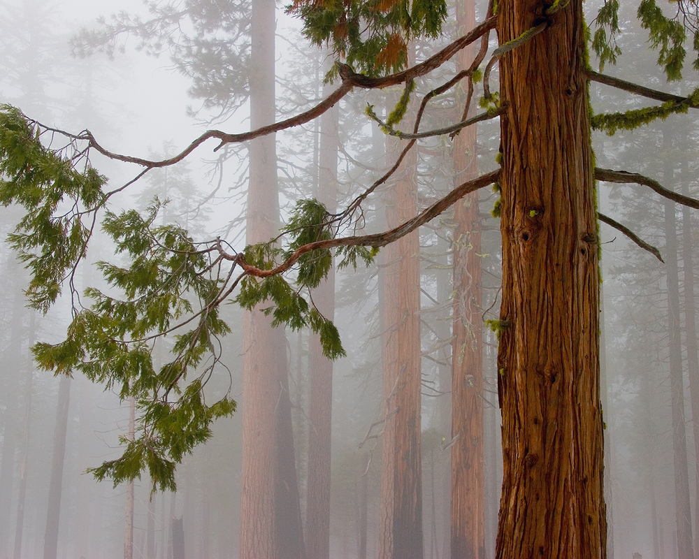 Aroma of Cedar.jpg