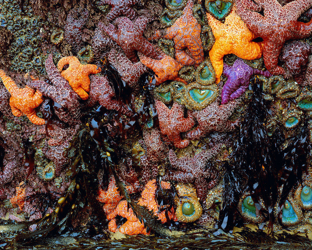 SeaWallofStars.jpg