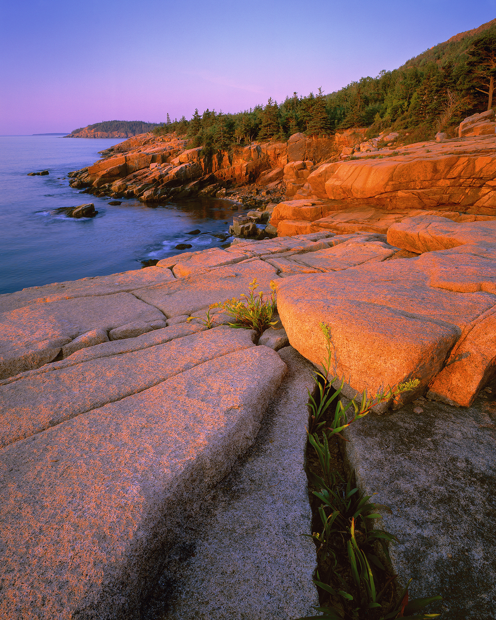 Sunrise at Otter Point.jpg