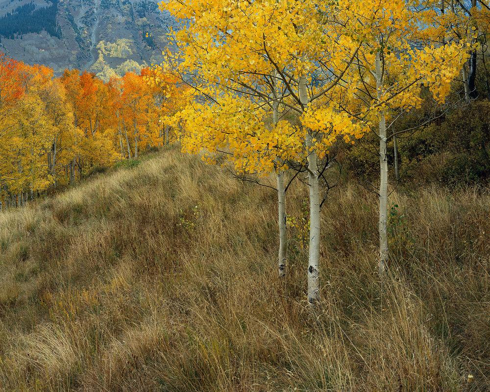 Aspen Hillside.jpg