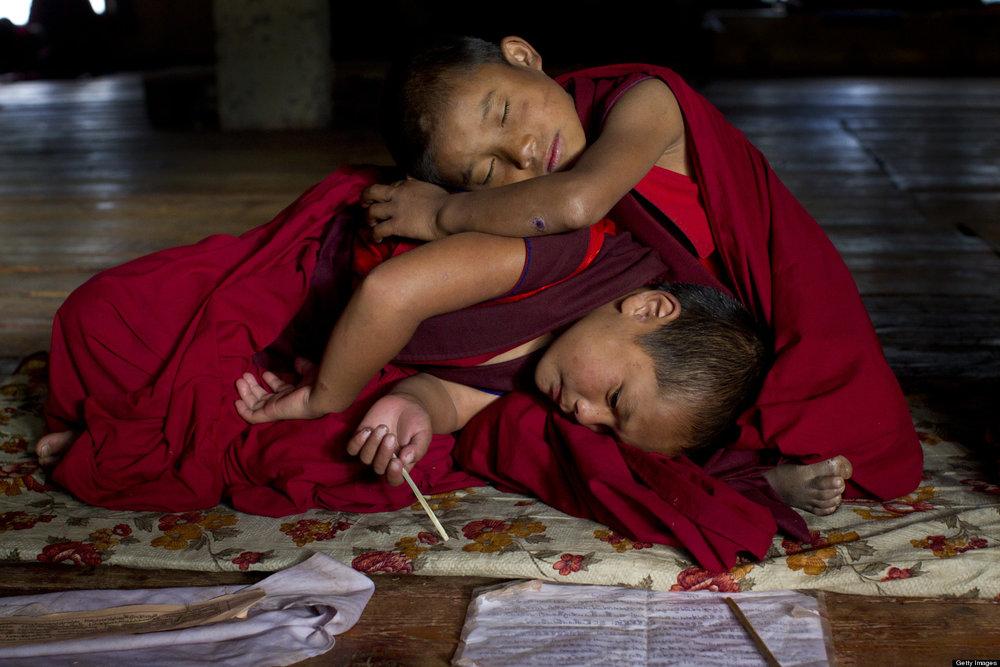 Lamas Sleeping.jpg