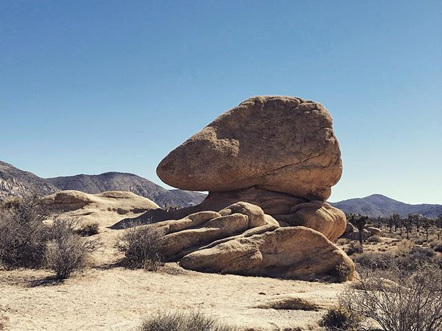Art seems to attempt to recreate or touch upon the natural beauty already existing in the world.  How perfect this form, how sculptural and inviting. I see the perfected forms of my own dream work out here in this paradise. .  #joshuatree #desert #inspiration #sculpture #naturalperfection #nature_perfection #art