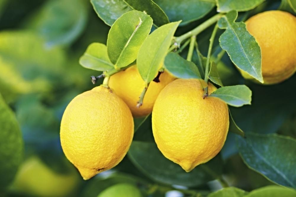 lemons259.jpg