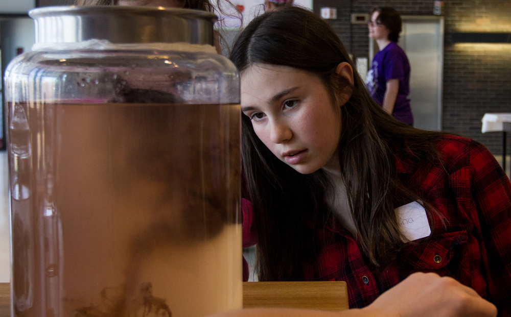 Sarahfina Madden, 11, looks at a human brain during Boston University's B.R.A.I.N.  (Bringing Recognition and Interest to Neuroscience) Day April 10, 2016 in Boston University's George Sherman Union in Boston, Mass.