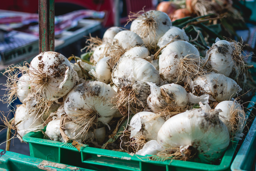 foodiesfeed.com_dirty-garlic-on-a-market.jpg