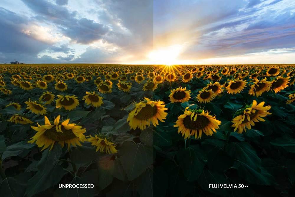 Velvia-compare.jpg