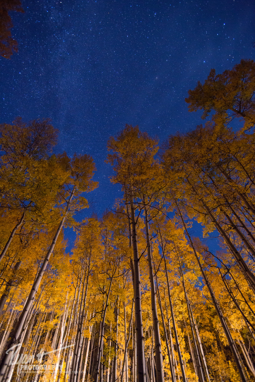 crested-butte-night-phtoography-aspens.jpg