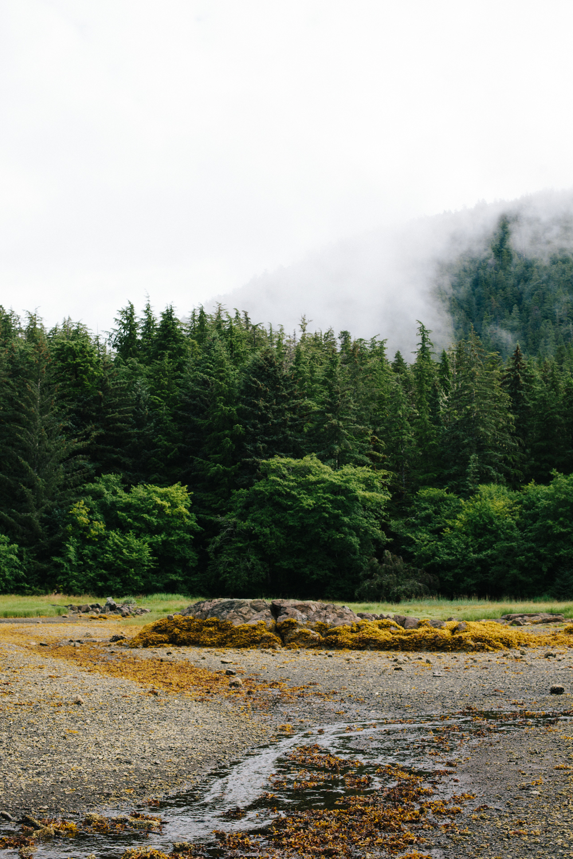 Sitka, Alaska II