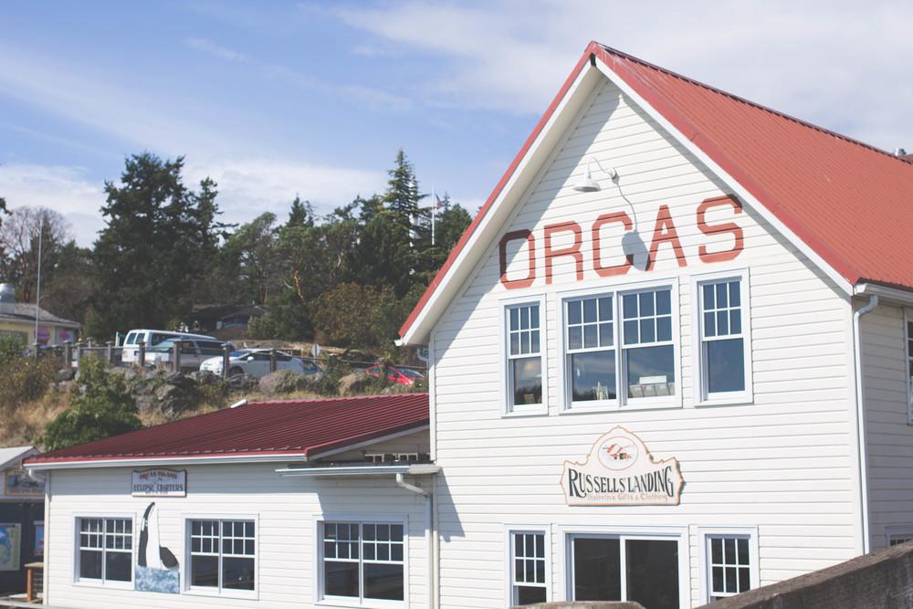 orcas1 (74 of 97).jpg