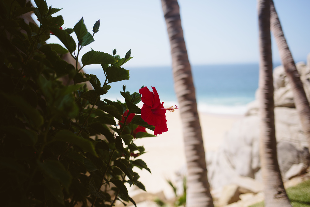 Cabo (11 of 16).jpg