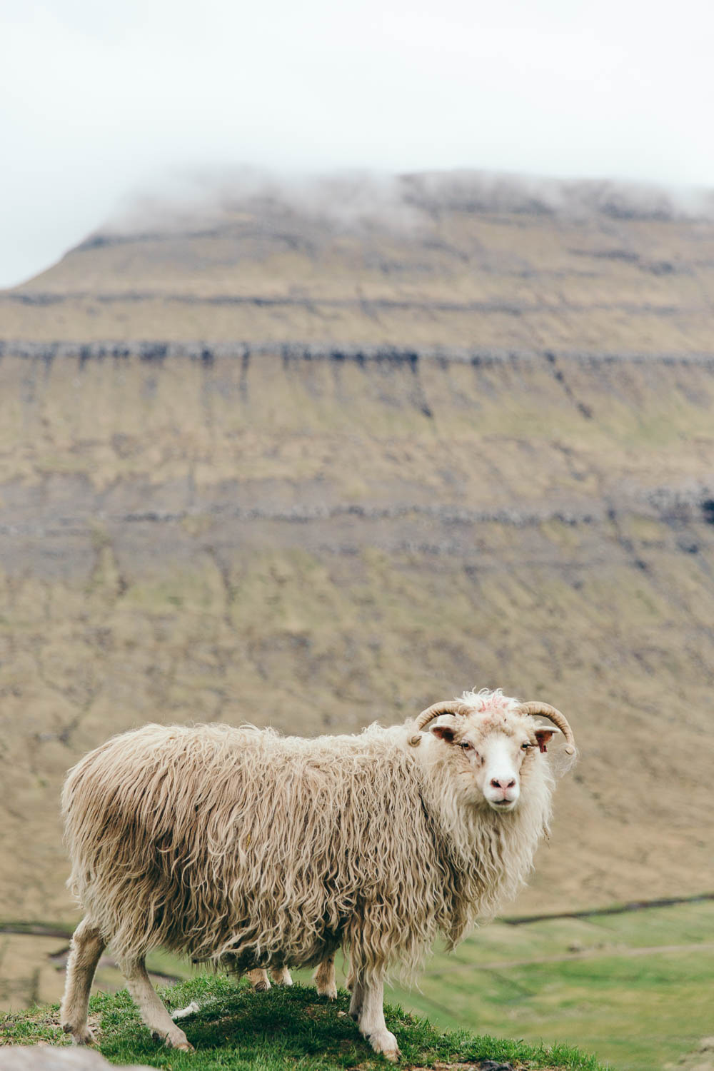 PhilippaLangley_FaroeIslands-2817.jpg