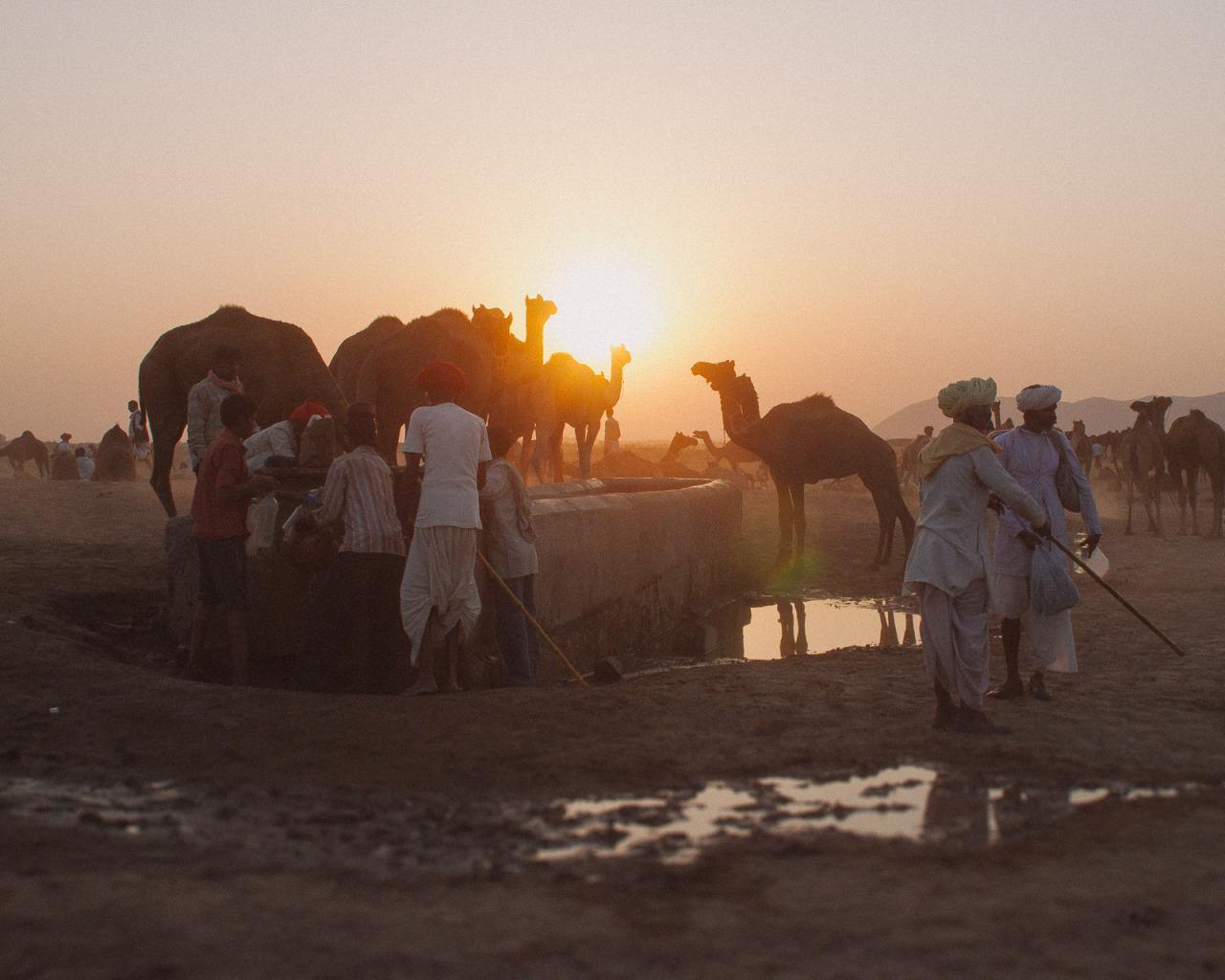 Pushkar - Rajasthan    website | flickr | instagram