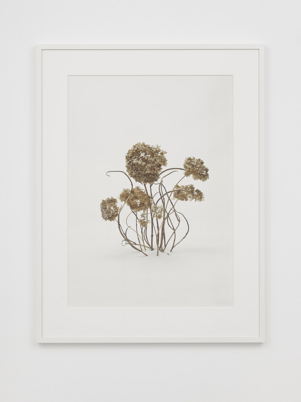 Untitled 5, 2014, digital fine art pigment print,Framed dims. 109.22 x 83.82 x 3.49 cm, Image dims. 85.6 x 61 cm