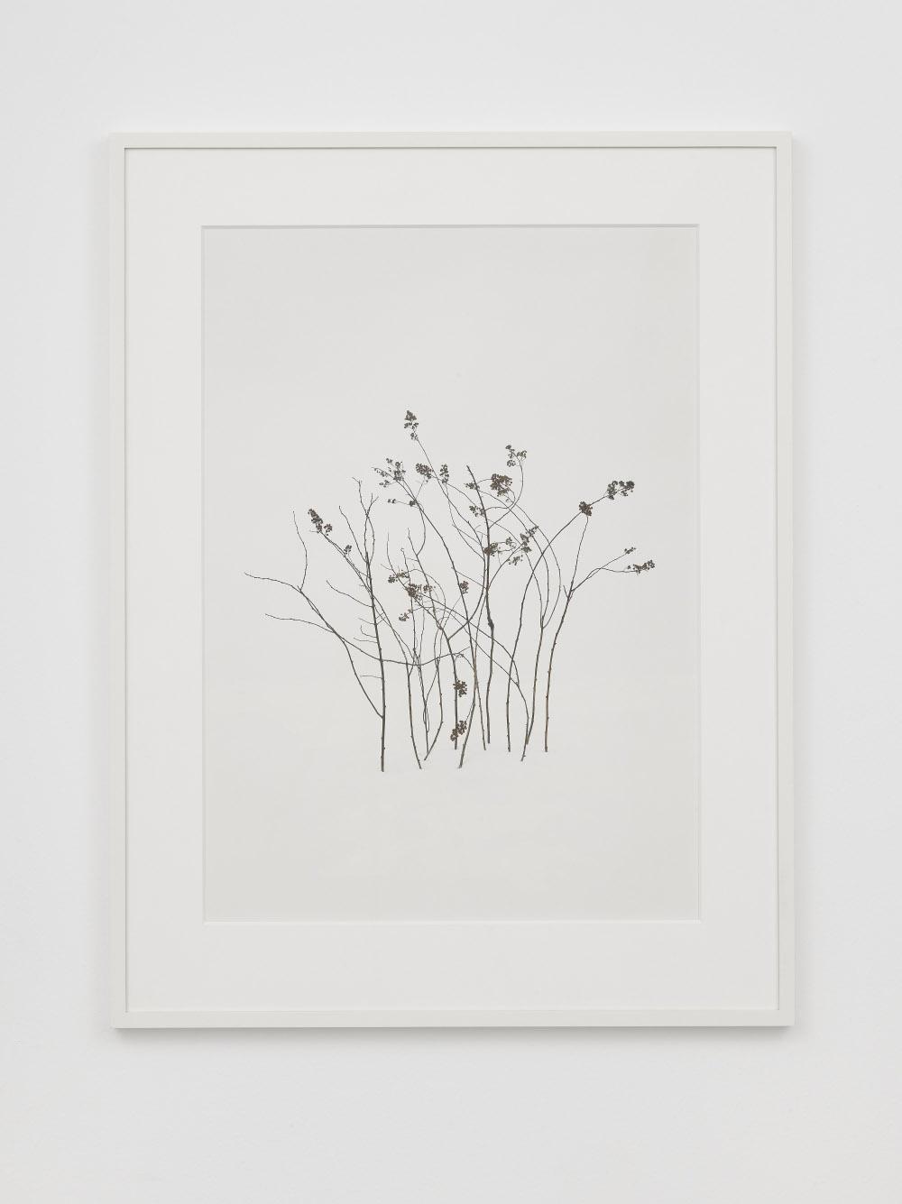 Untitled 8, 2014, digital fine art pigment print,Framed dims. 109.22 x 83.82 x 3.49 cm, Image dims. 85.6 x 61 cm