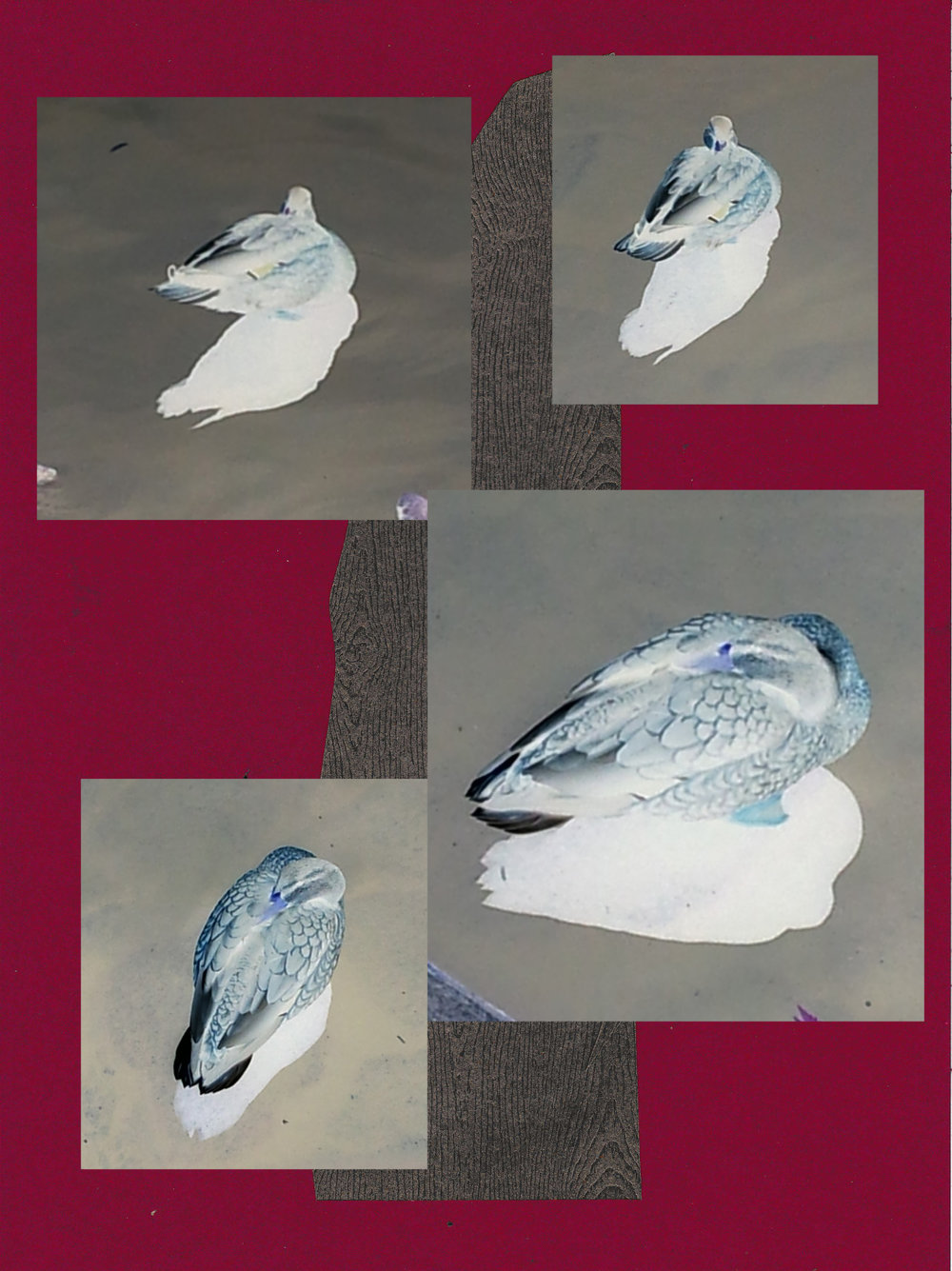 013 ducks, handmade paper on photographs.jpg