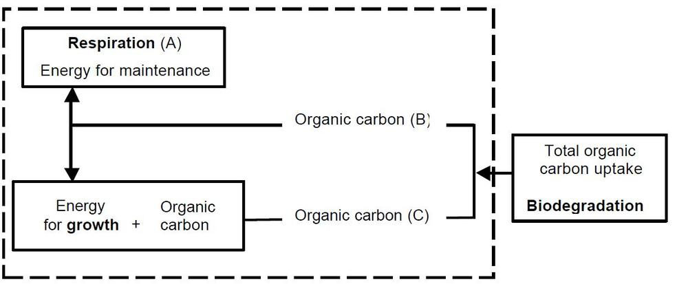 Figure 1.  Simple model showing the relationship between microbial respiration, growth and biodegradation in heterotrophic bacteria.