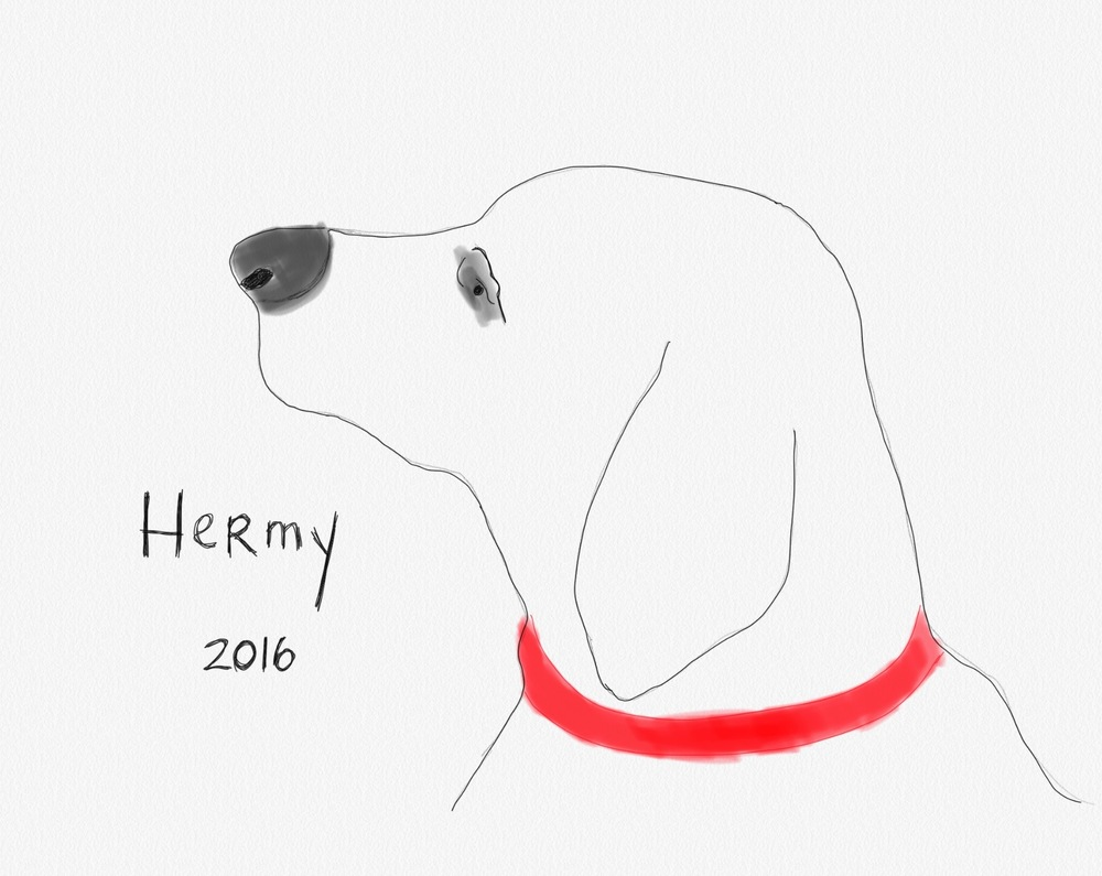 Hermy                Ipad painting