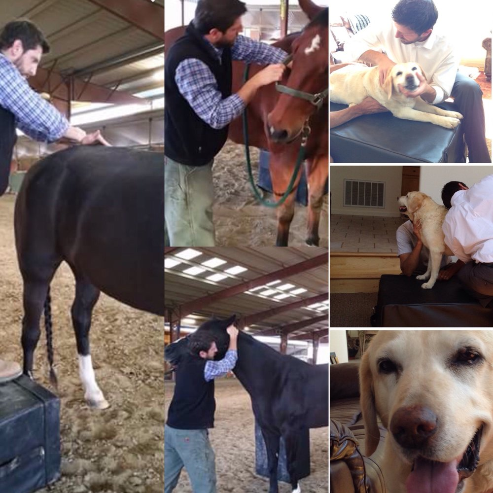 Dogs & Horses   Adjustments have been shown to improve performance in Dogs and Horses, as well as be an integral component in keeping the Nervous System free of nerve irritation.  We take care of a lot of pups some in serious need and some having their spinal wellness checks. We love seeing animals in the office with a vet referral or on sight.