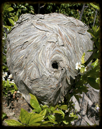 biogallery_nest_1.png