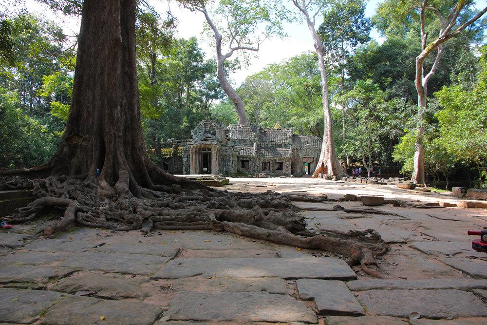 Tree in Angkor Wat