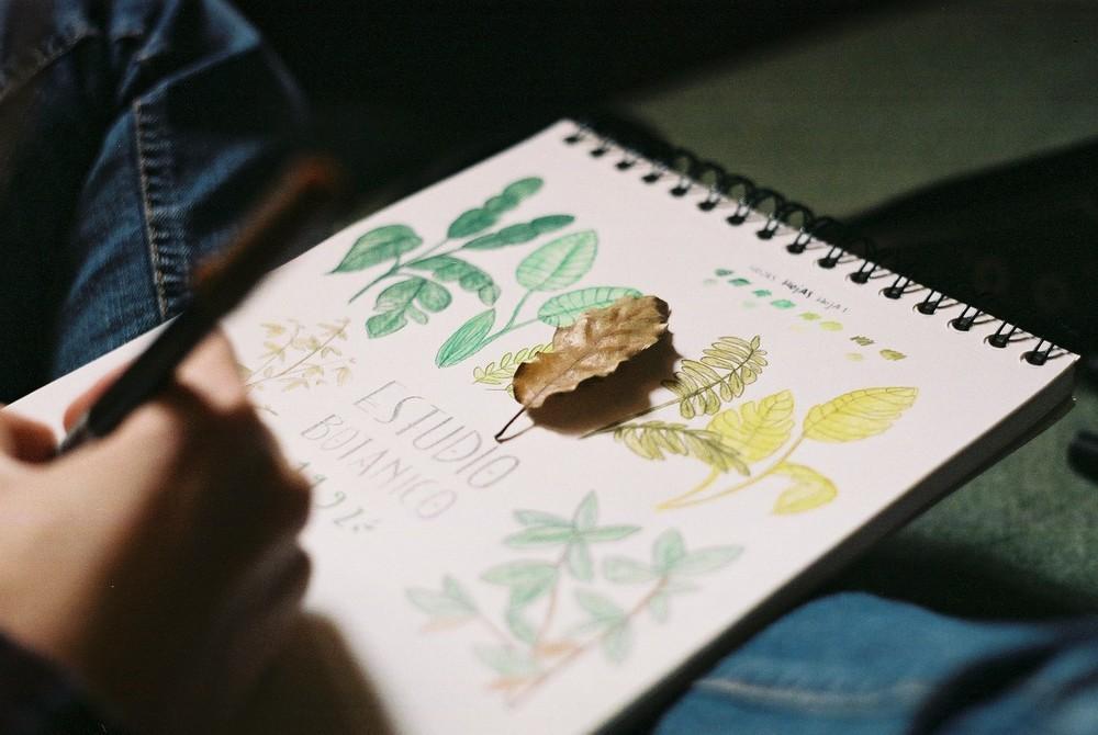 dibujos-de-hojas.jpg
