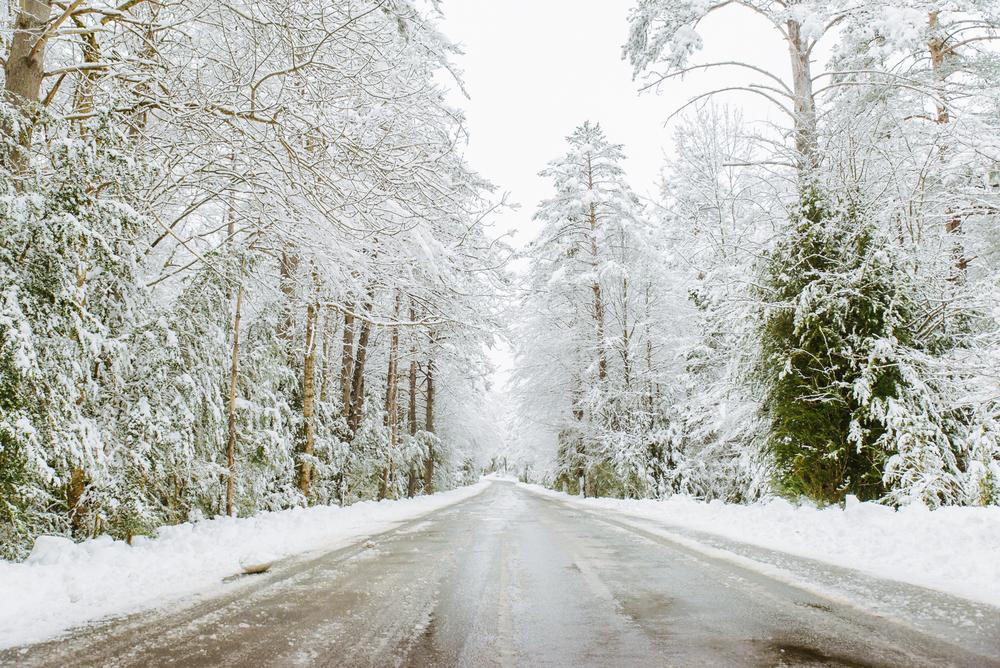 bosque-nevado-monte-perdido.jpg