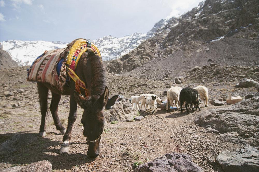 Foto: Jaume Ramis. Expedición Morocco 2015