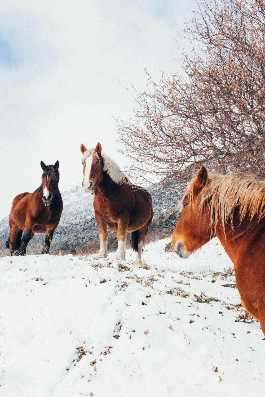 Naturaleza salvaje de los Pirineos | Foto: Adrián Cano