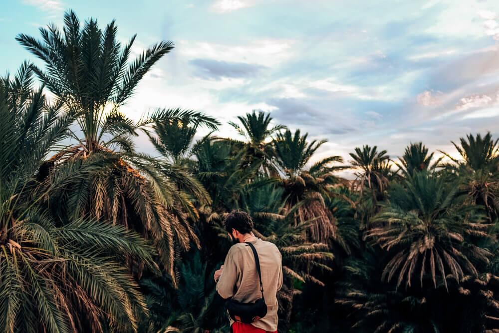 Oasis de palmeras en Merzouga | Foto: Adrián Cano