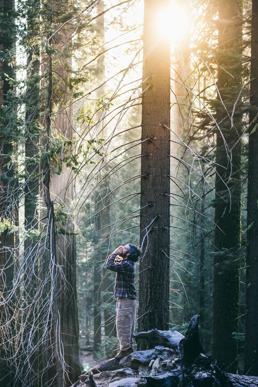 Sonidos en los bosques de California | Foto:Juan Sisto